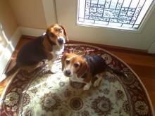 Libby & Sissy Braaksma.  Simply irresistible!