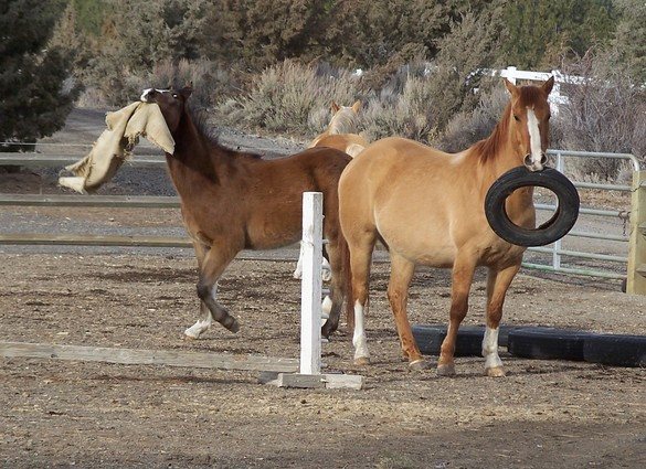 Drover & Adobe just horsin' around!