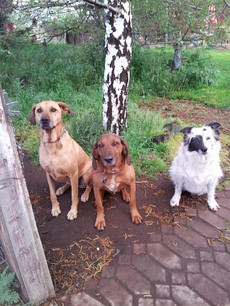 Bayou, Redd & Lacy Knox on a  Sit, Stay before dinner.