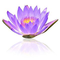 Fleur-amouretconscience-v2.jpg