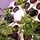Thumbnail: GHE Rainforest 2 für 36 Pflanzen 12Volt (LFZ 5-7 Tage)