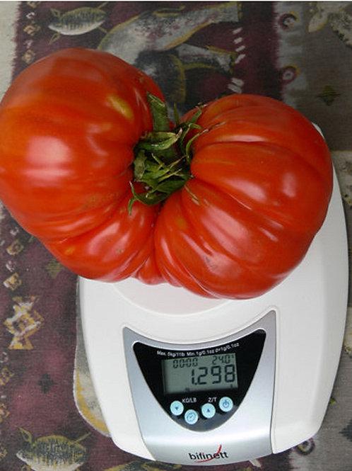 """Grow-Genie´s Super """"Muchamiel"""" Riesen Tomaten Samen"""