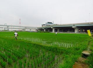 田んぼ作業・穴刈り
