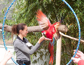Jen training a macaw
