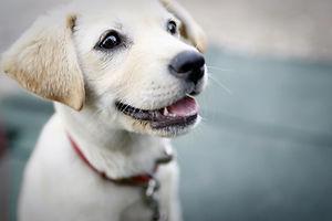 dog-425067.jpg