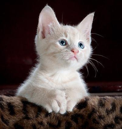 alert kitten.jpeg