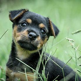 puppy-2807713.jpg