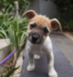 puppy-406163.jpg