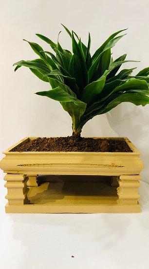 Vietnames Planter