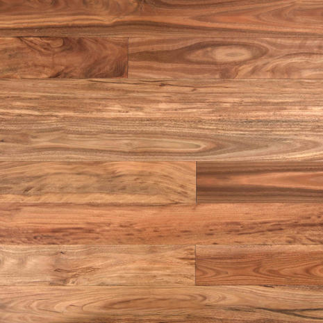 Pacific Spotted Gum.jpg