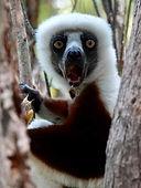 lemur.jpg