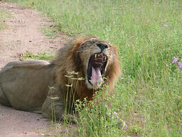 Africa2008 133.jpg