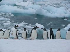 Antartica_new_(124).jpg