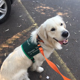 Barney Therapy dog .JPG