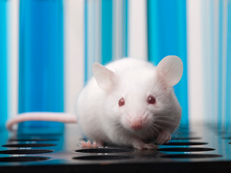 CRISPR Restores Muscle Function in Mice