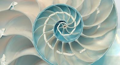 SpiralShell.png
