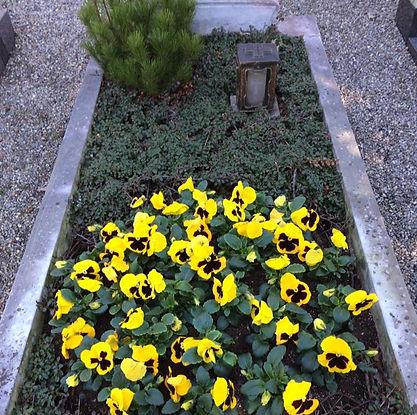 Grabpflege Grabbepflanzung Stiefmütterchen