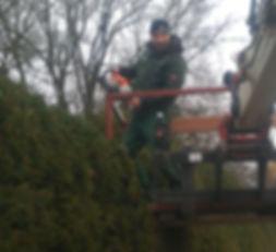 Jonas Schöberl Heckenschnitt Heckenschere Hecke schneiden Hubsteiger Pflege
