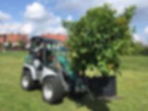 Pflanzenüberwinterung Containerpflanze mediterrane Pflanzen
