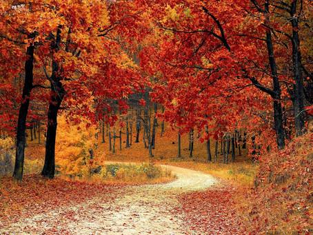 Couleurs flamboyantes de l'automne ...