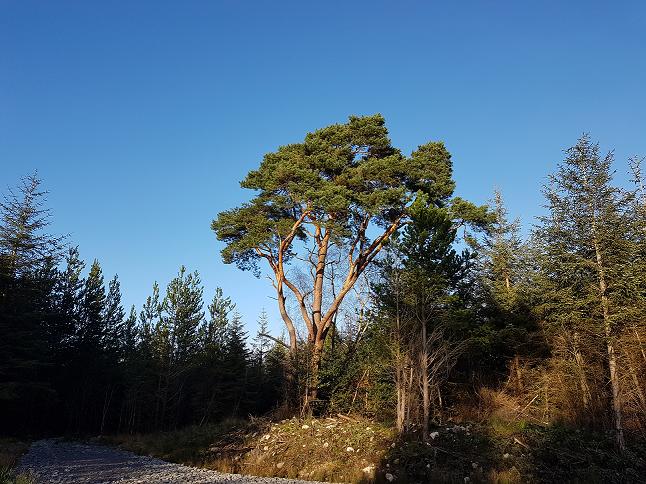 A tree, a simple tree