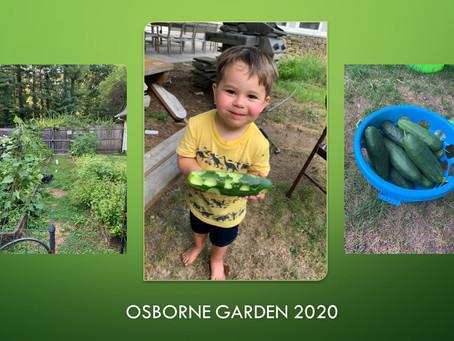 Week 37: Gardening