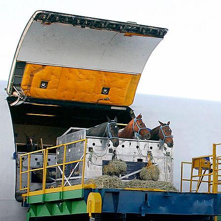 horses_transport.jpg