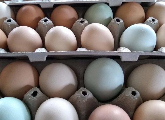 2021 CSA - Egg Share