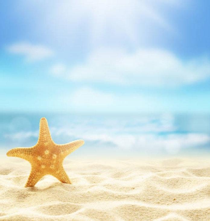 Starfish image.jpg