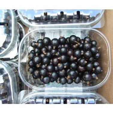 Berries ~ Blackcurrants
