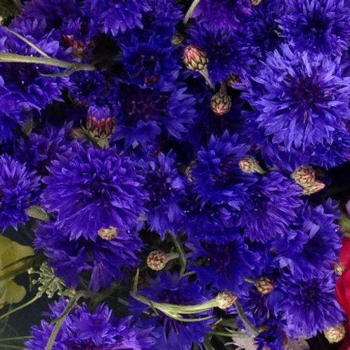 Flower - Cornflowers