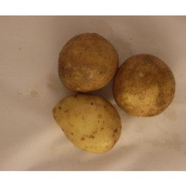 Potatoes White