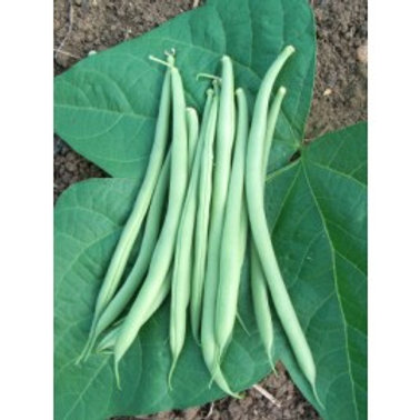 Beans ~ French Beans