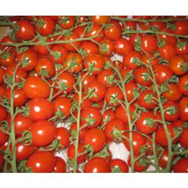 Tomatoes Cherry Vine