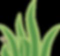 foliage-2.png