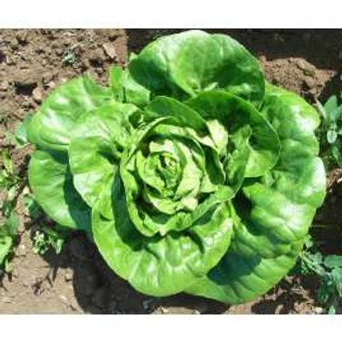 Lettuce Little Gem Doubles