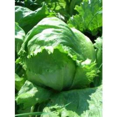 Lettuce Webbs