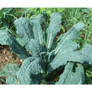Kale Cavolo Nero