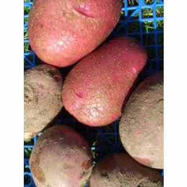 Potatoes Reds