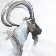Small Goat Profile.jpg