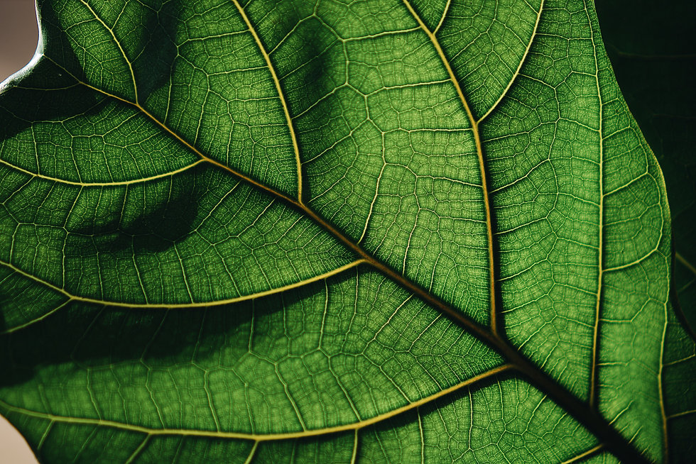 leaf-texture-background_t20_OzGBy2.jpg