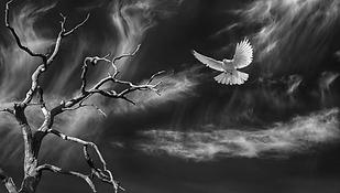 Dove Descending.png
