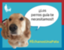 Perra golden retriever dice ¡Los perros guía te necesitamos! Échanos una pata