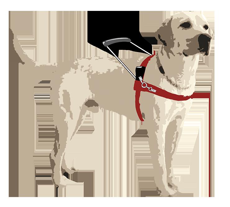 Consentidos | Perros Guía para Ciegos
