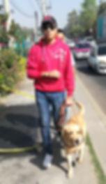 Usuario de perro guía en calle