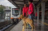 Dos usuarios de perros guía en un anden, esperando para abordar el metro