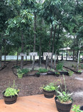 PCRM Main Campus Organic backyard 2018.j