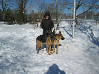 Note from the author: Animal rescue groups and animal shelters