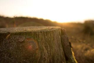 rognage et dessouchage d'un arbre après abattage