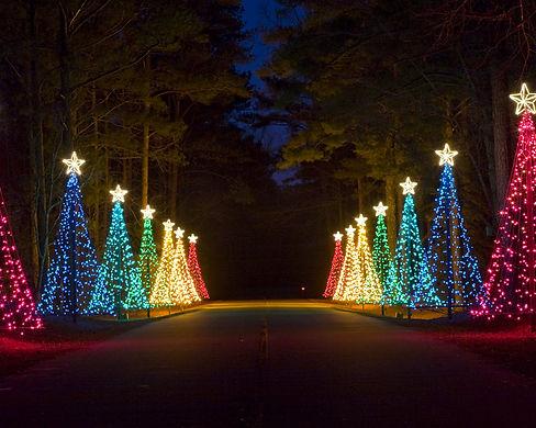 Christmas Tree Lane.jpg